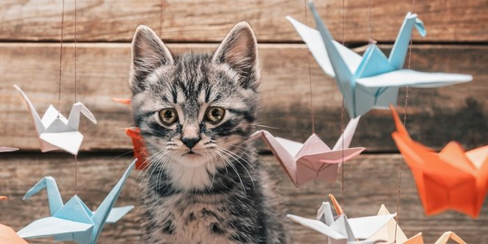 The Beginner's Guide to Origami