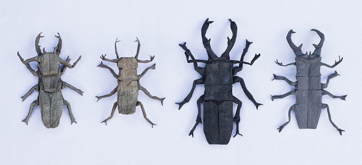 Stag Beetle Evolution