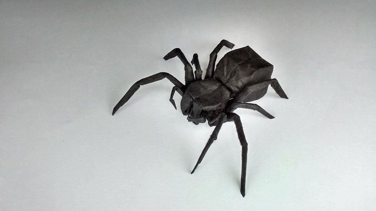 Spider by Chris Heynen