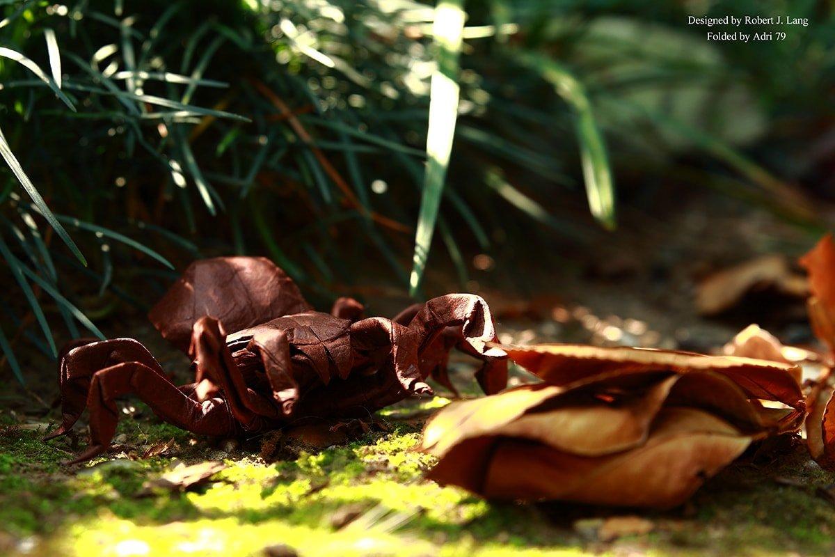 Tarantula Outside