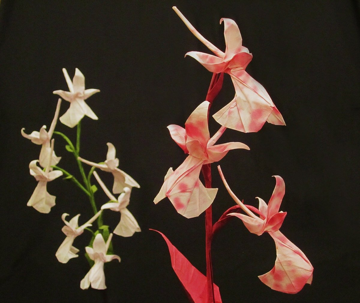 Anatolian Orchid