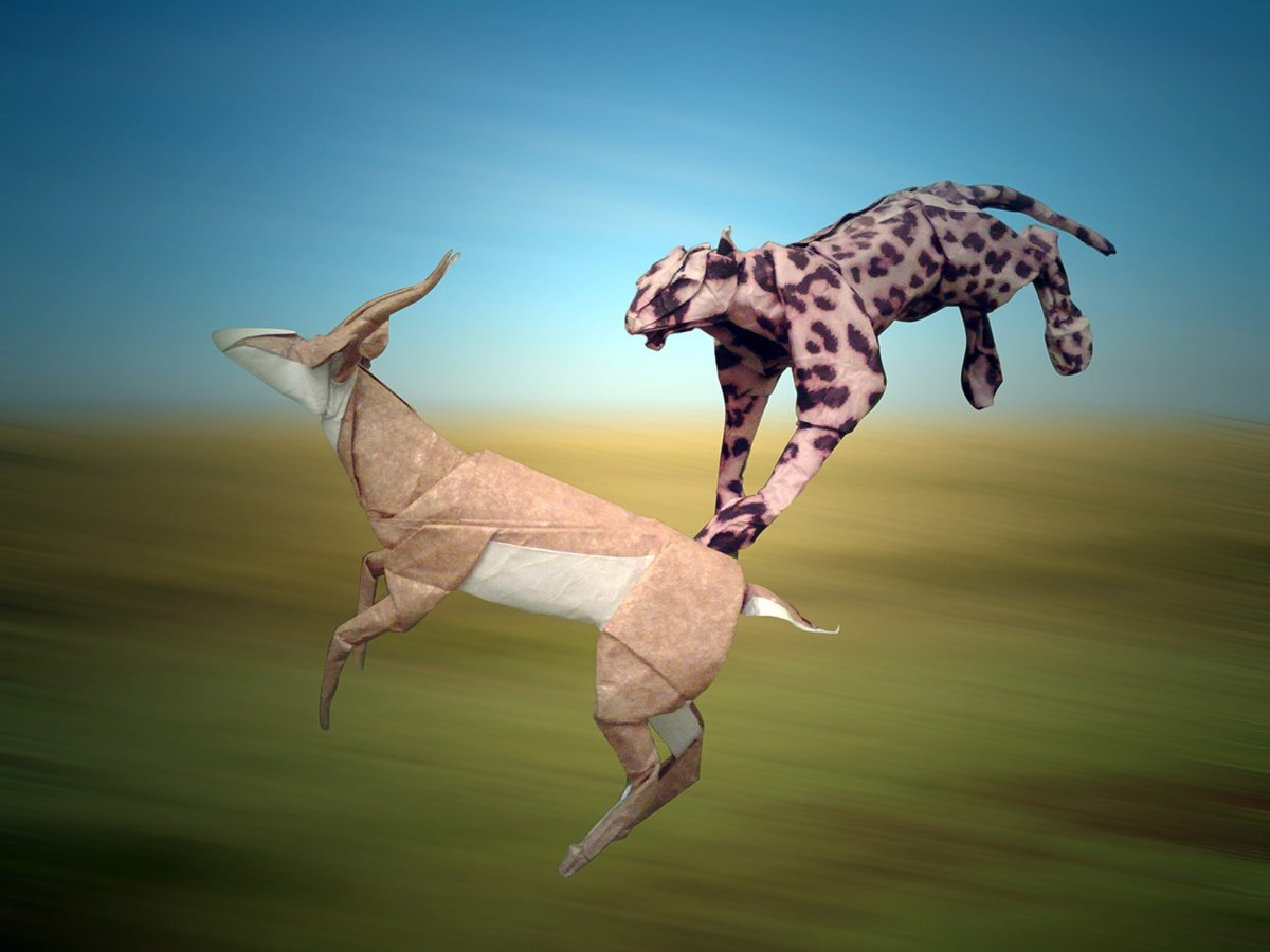 Cheetah and Springbok