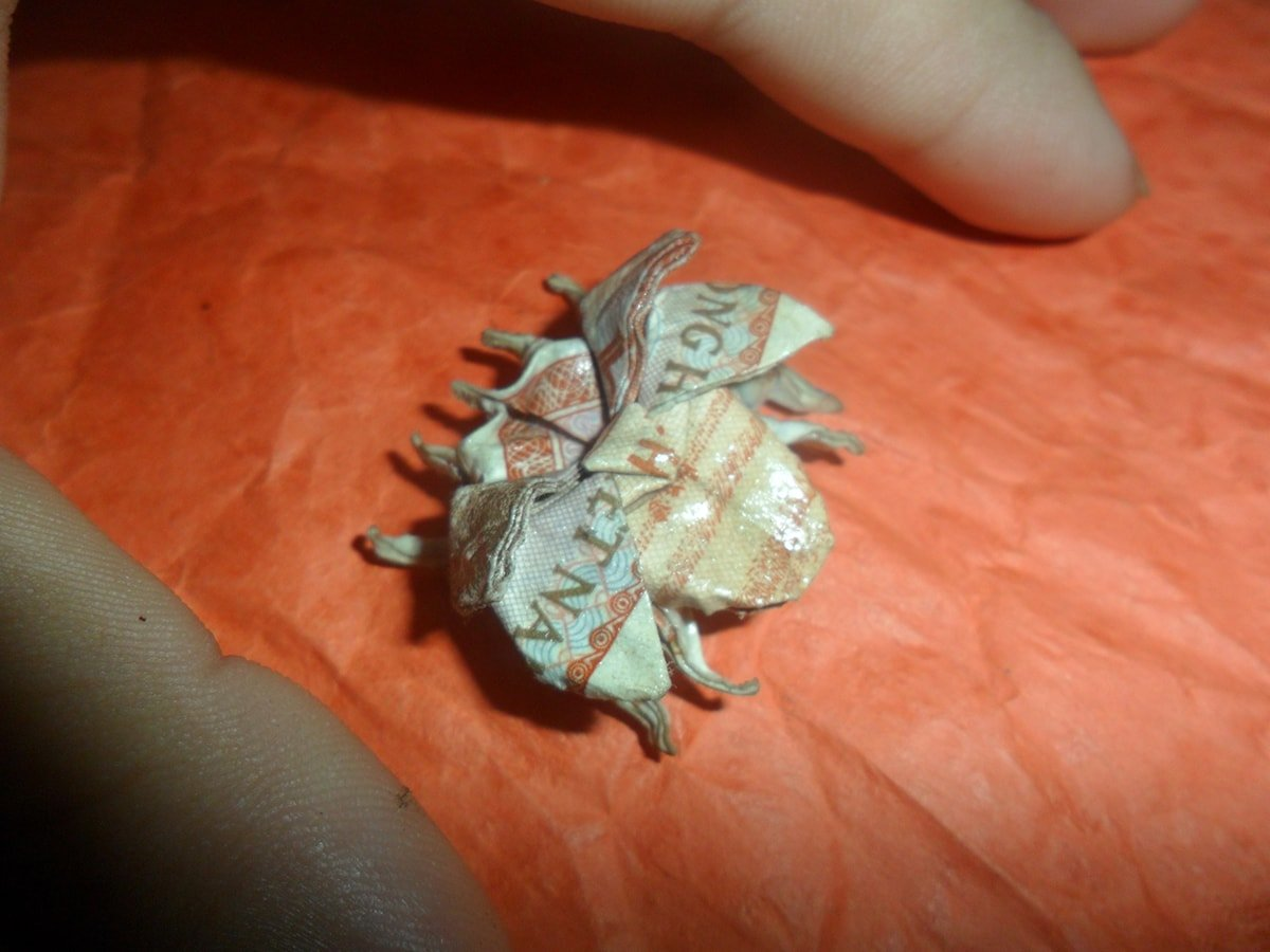 Origami Money Insect