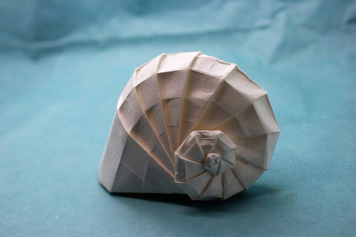 Navel Shell
