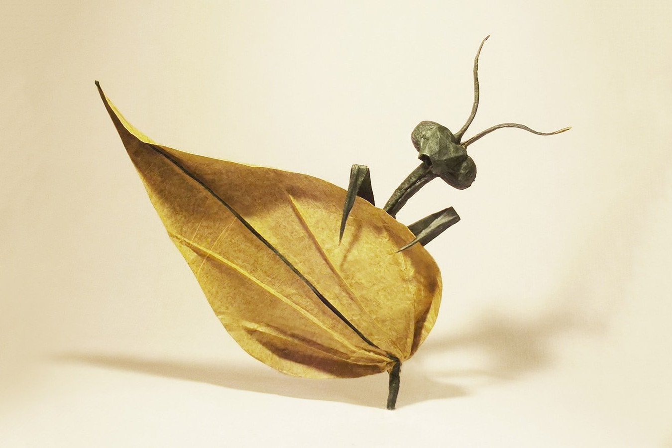 Secret Insect