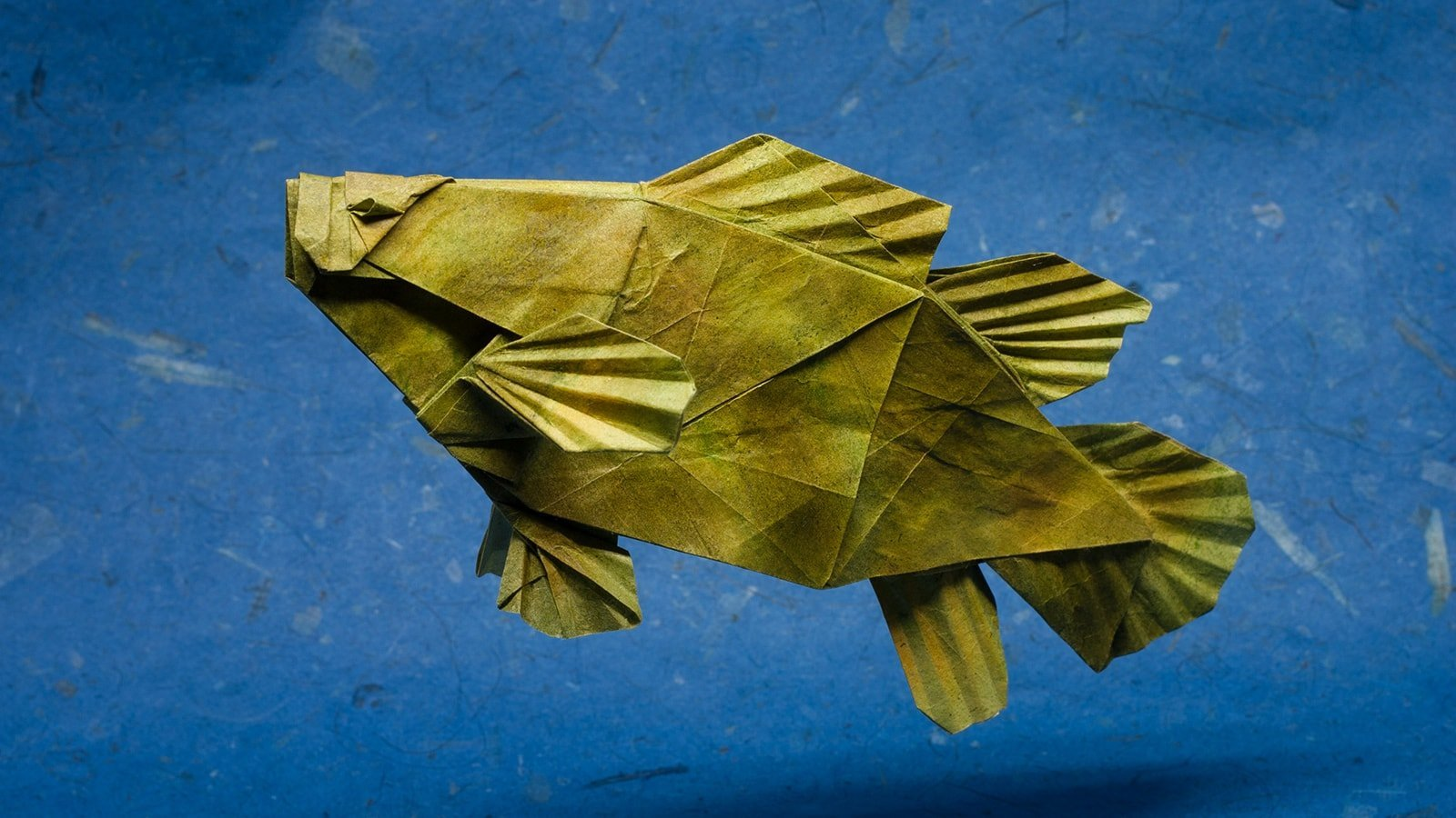 Magnificent Origami Sharks To Celebrate Shark Awareness Day Diagram Grouper