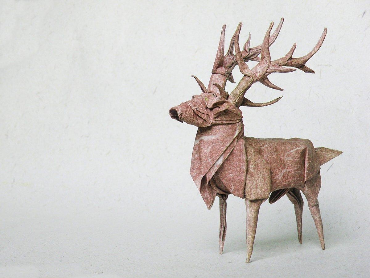 Elk by Pham Hoang Tuan