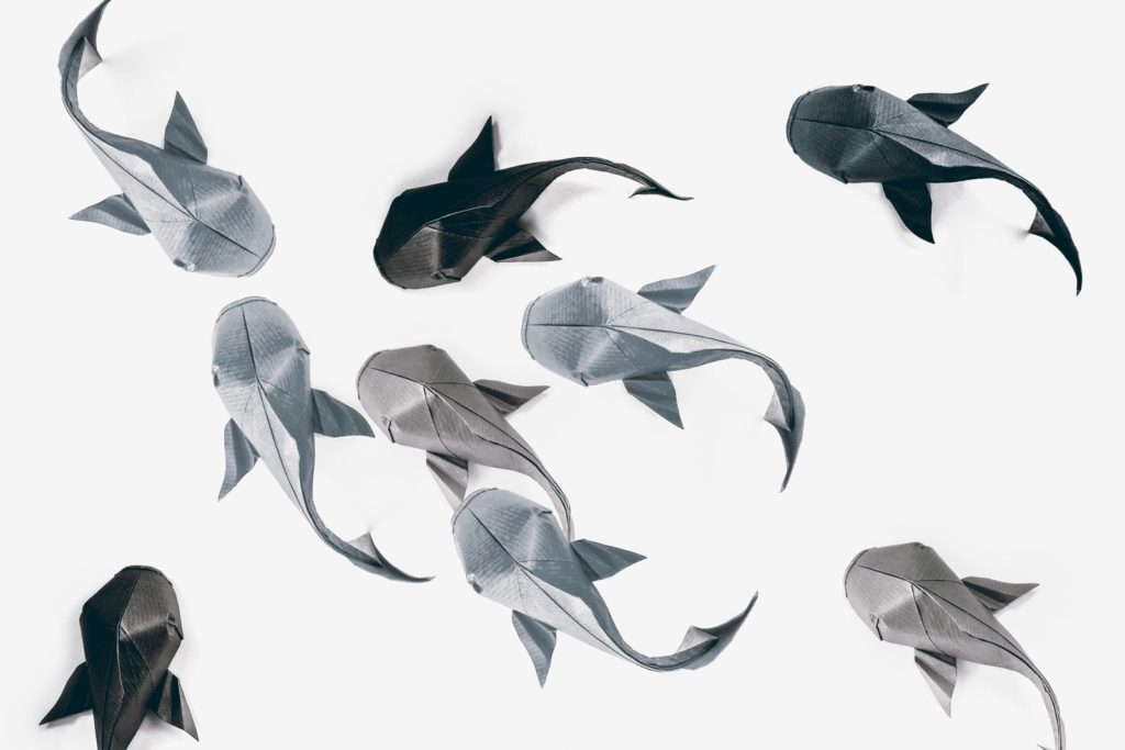 You should definitely give a carp about these beautiful for Origami koi fish