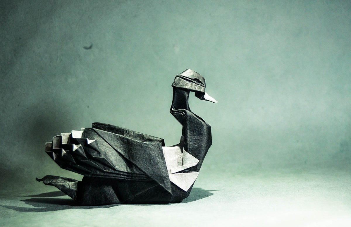 Common Loon Folded by Gonzalo