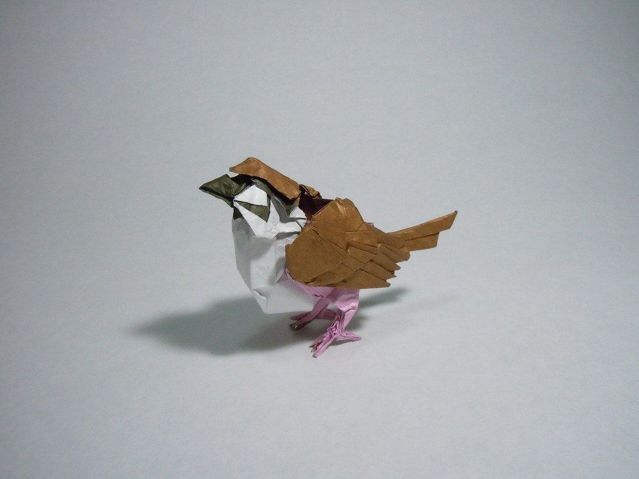 Eurasian Tree Sparrow by Jhon Doe