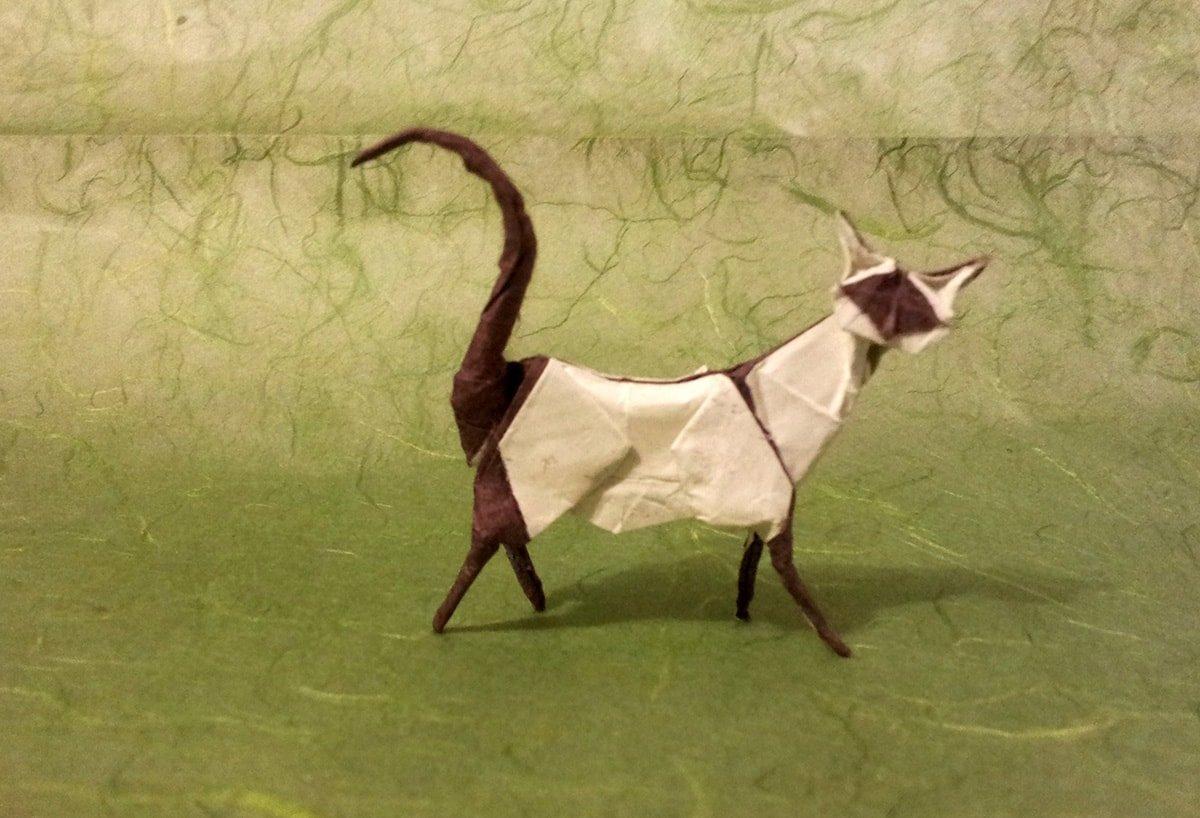 Fantastic Siamese Cat