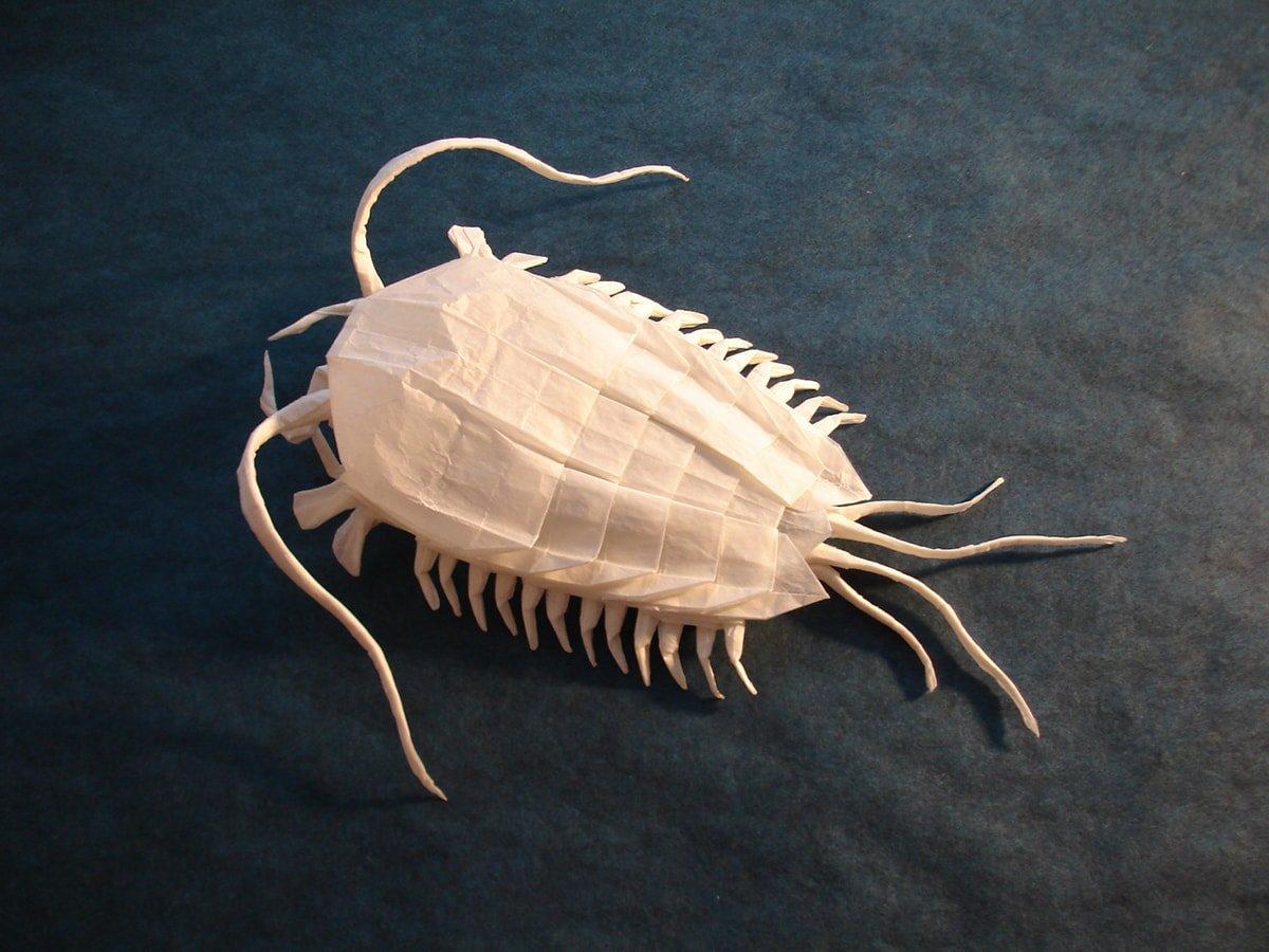 Trilobite folded by Shuki Kato