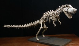 18 Mind-Blowing Origami Dinosaur Skeletons