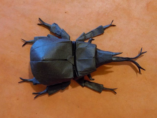 Samurai Helmet Beetle