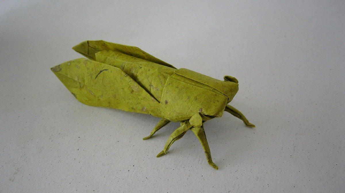 Wet Folded Cicada