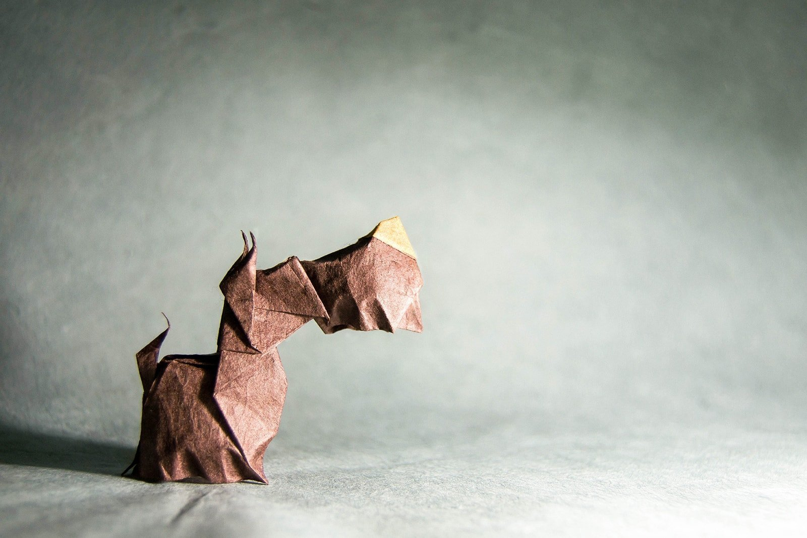 25 Pawsome Origami Dogs That You Mutt See Dog Diagram