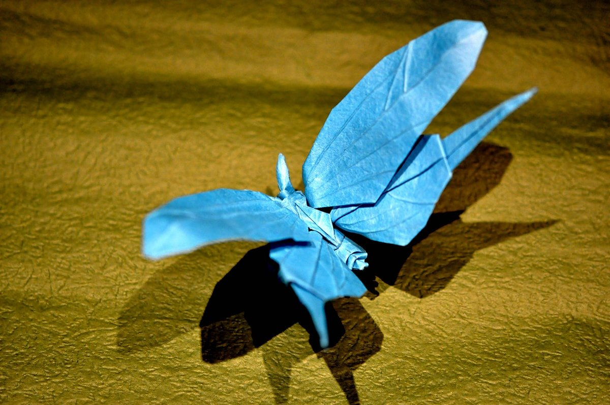 Bluedandelion Butterfly
