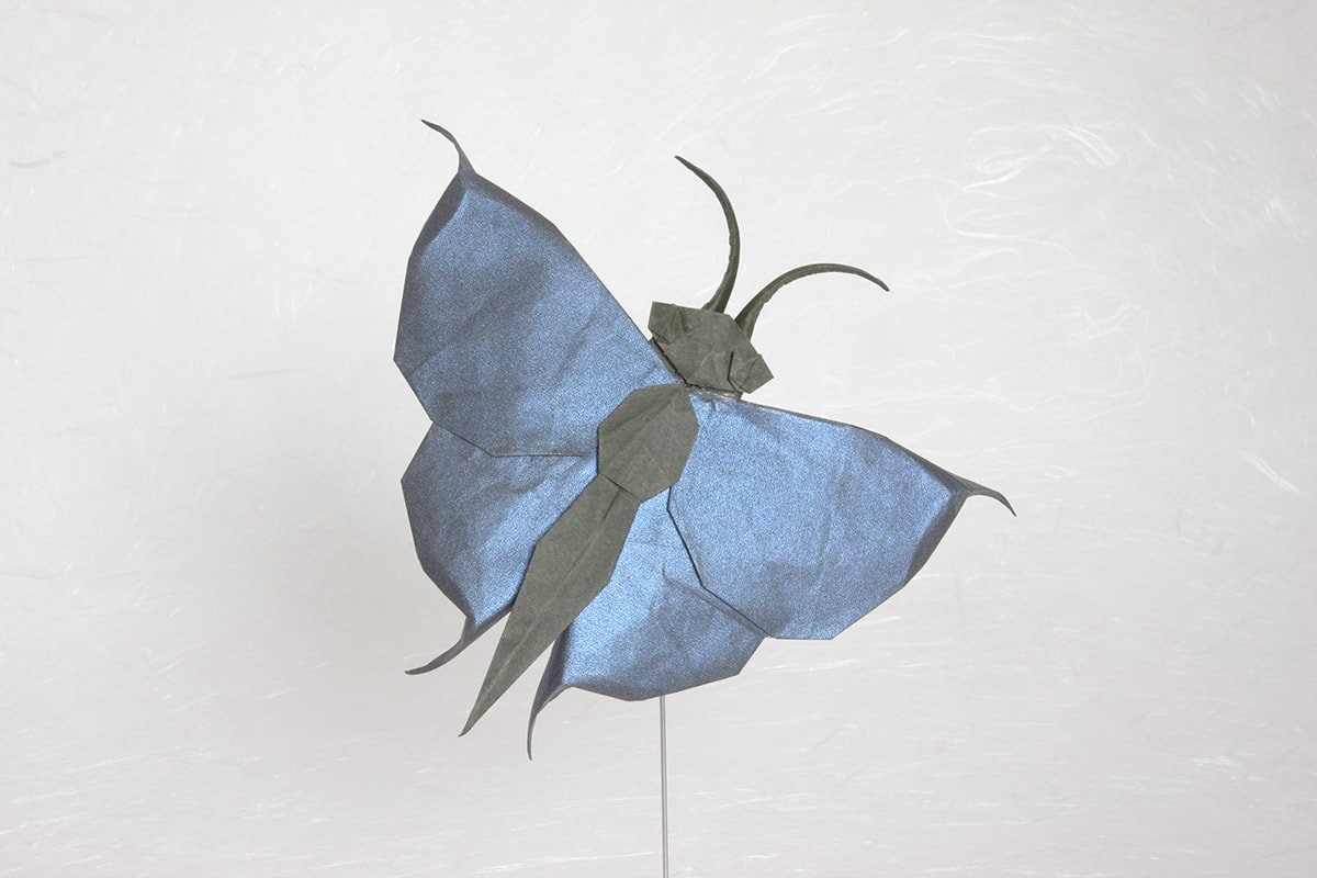Quentin Trollip's Butterfly
