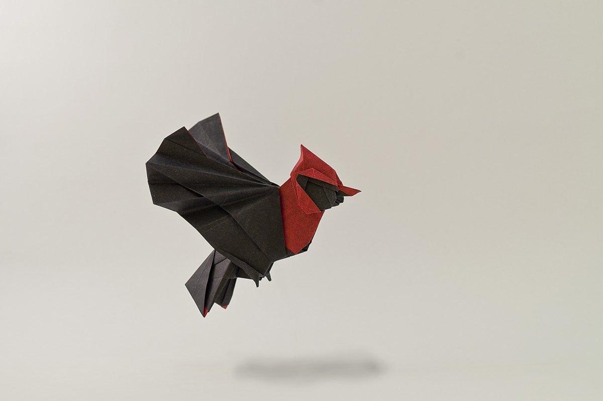 Pechirojo Bird by Fabián Correa