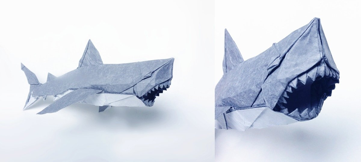 Great White Shark by Nguyen Ngoc Vu