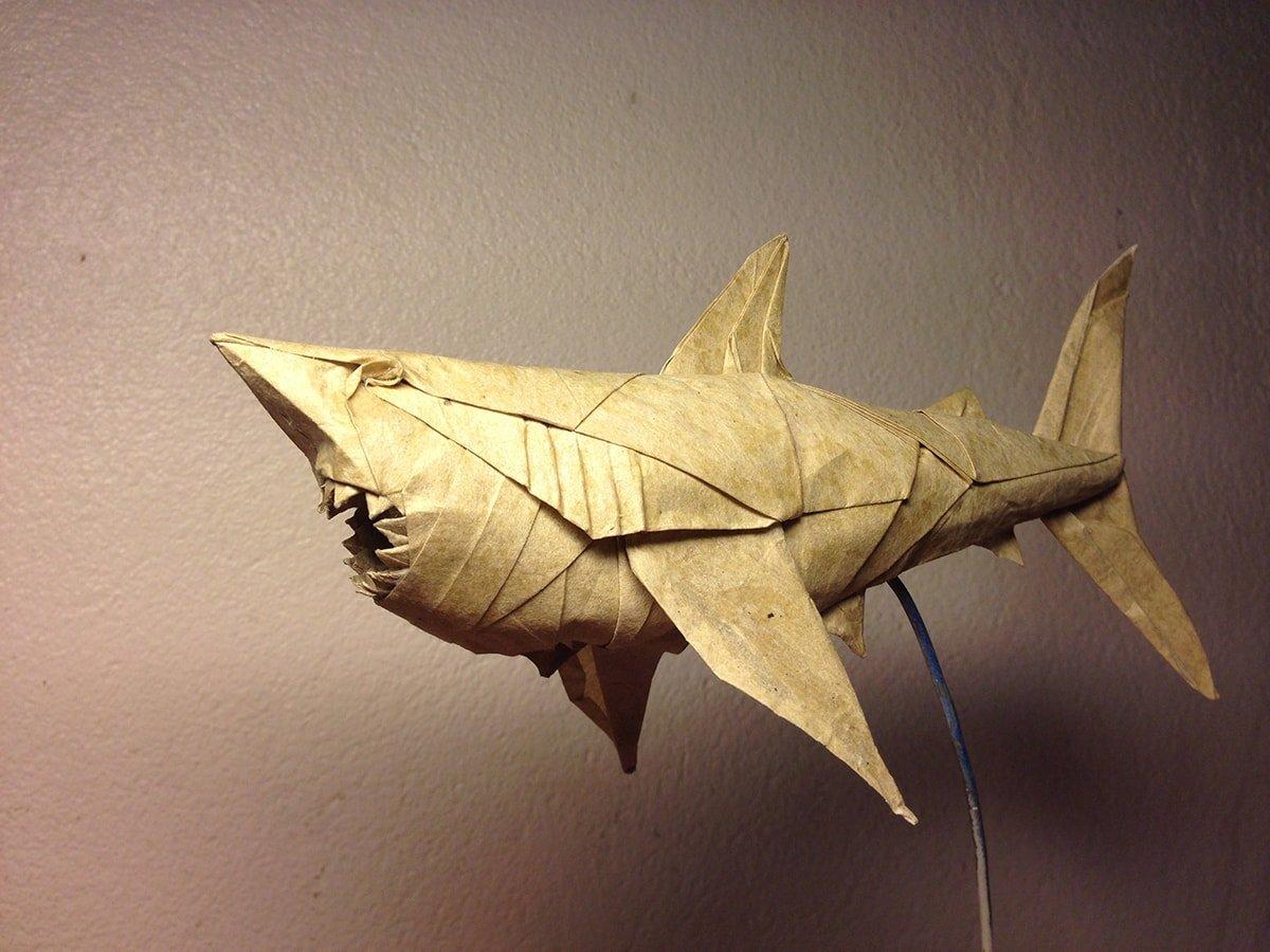Great White Shark by Nguyễn Hùng Cường