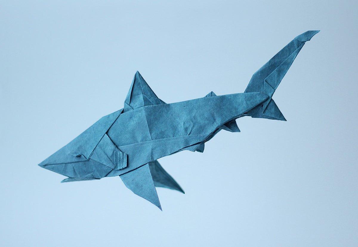 Bull Shark by Nguyen Ngoc Vu