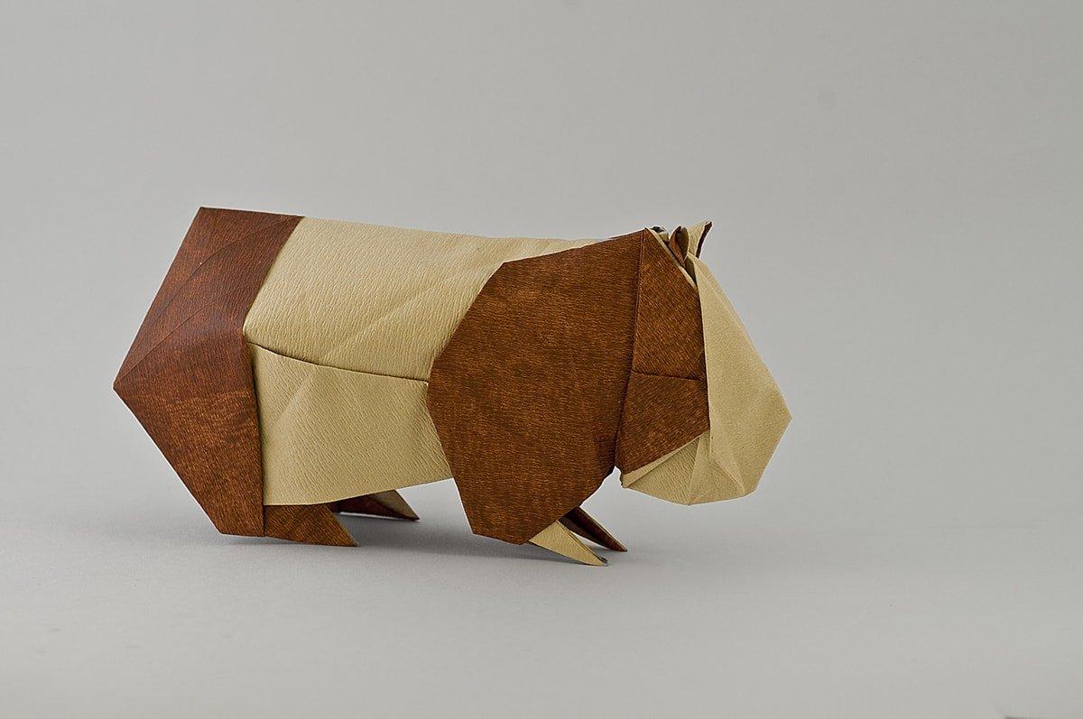 Guinea Pig by Nicolas Gajardo