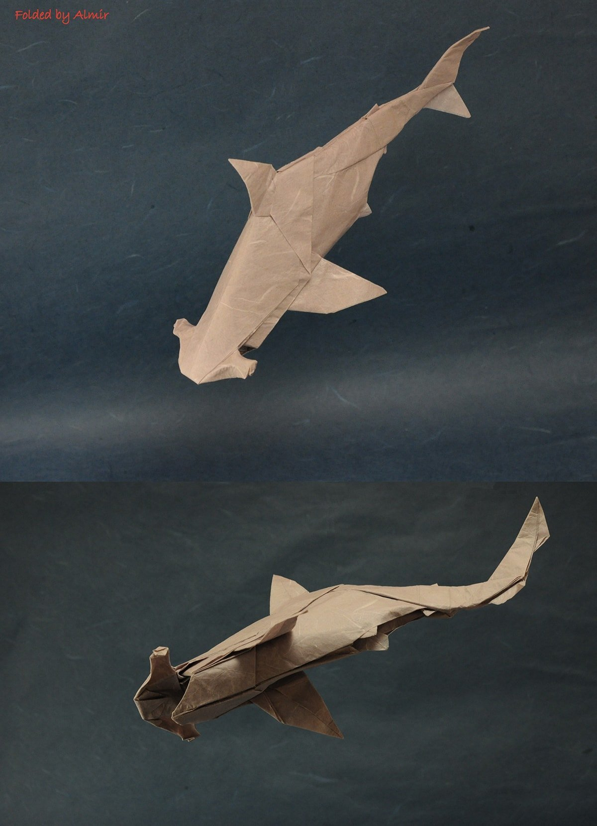 Hamerhead Shark by Ngueyn Ngoc Vu