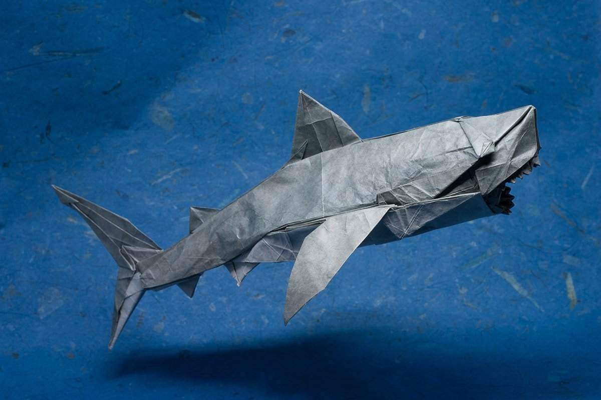 Great White Shark Folded by P. Colman