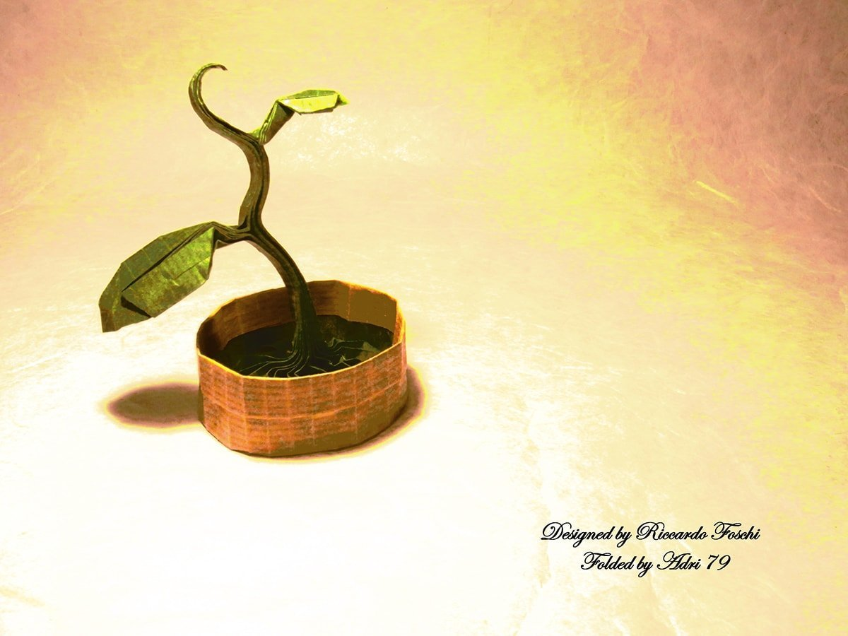 Sprout by Riccardo Foschi
