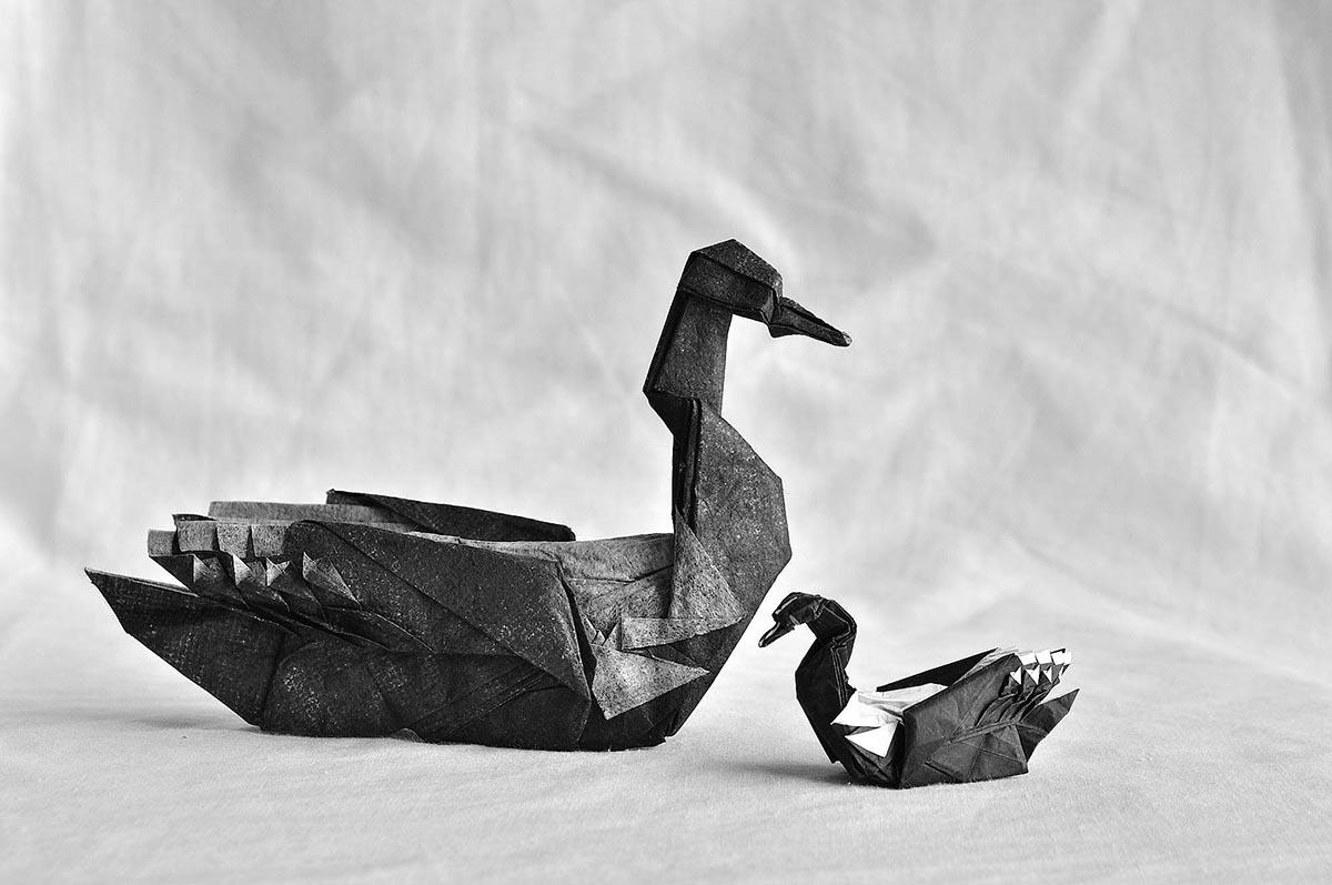 Common Loons - Artur Biernacki
