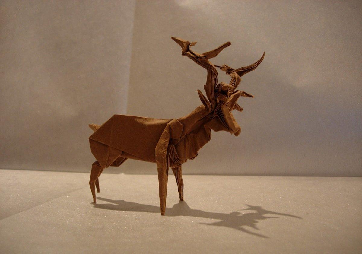 Roosevelt Elk - Robert Lang