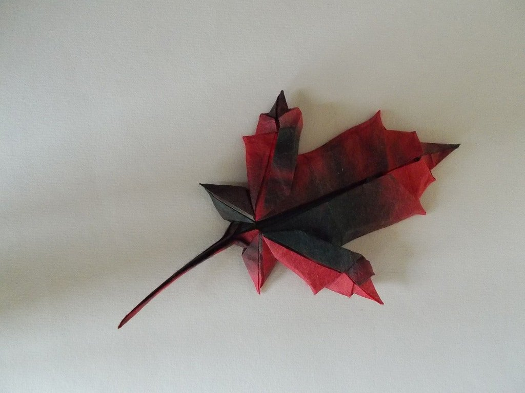 Maple Leaf by Brian Chan