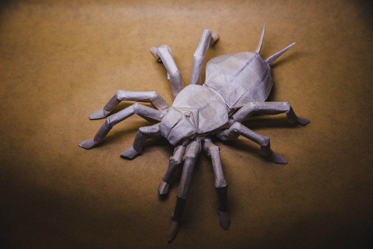 Tarantula by origami-M-H-G :)