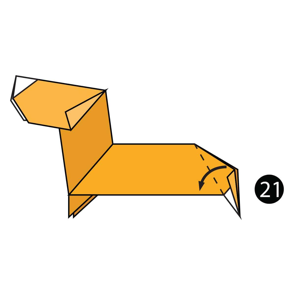 Dachshund Step 21
