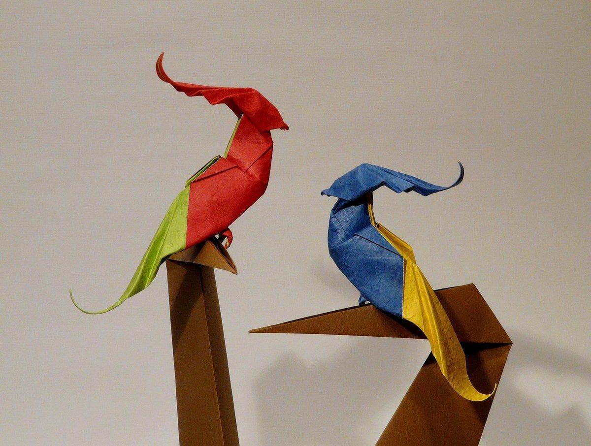 Baby Parrots