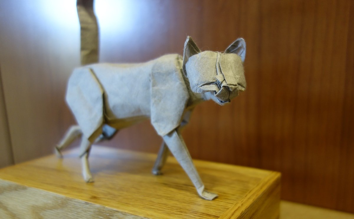 Cat by Seth Friedman