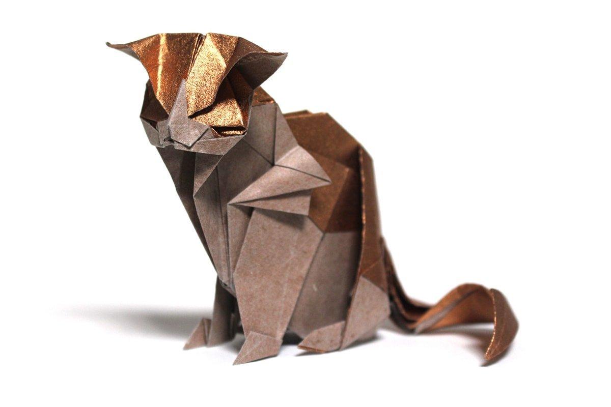 Katsuta Kyohei's Cat