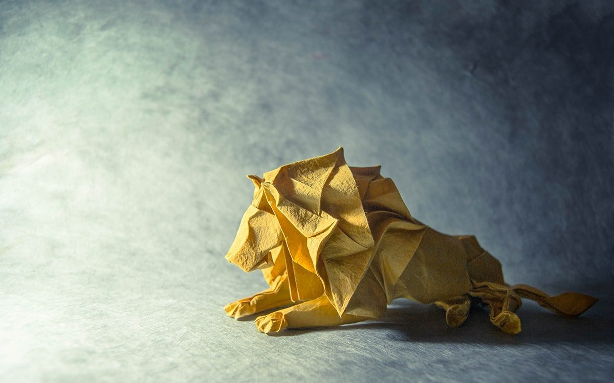 Lion by Gonzalo