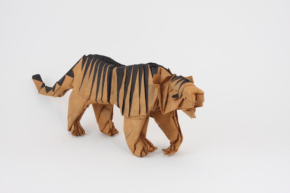 Quentin Trollip's Tiger
