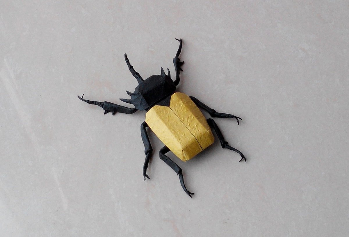 Yellow and Black Beetle