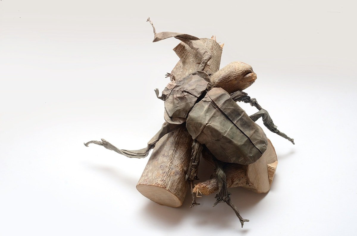 Yanbaru long-armed scarab beetle