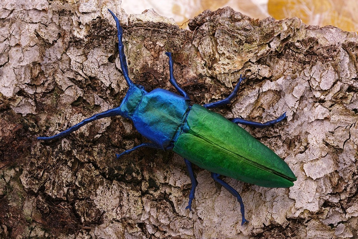 Jewel Click Beetle