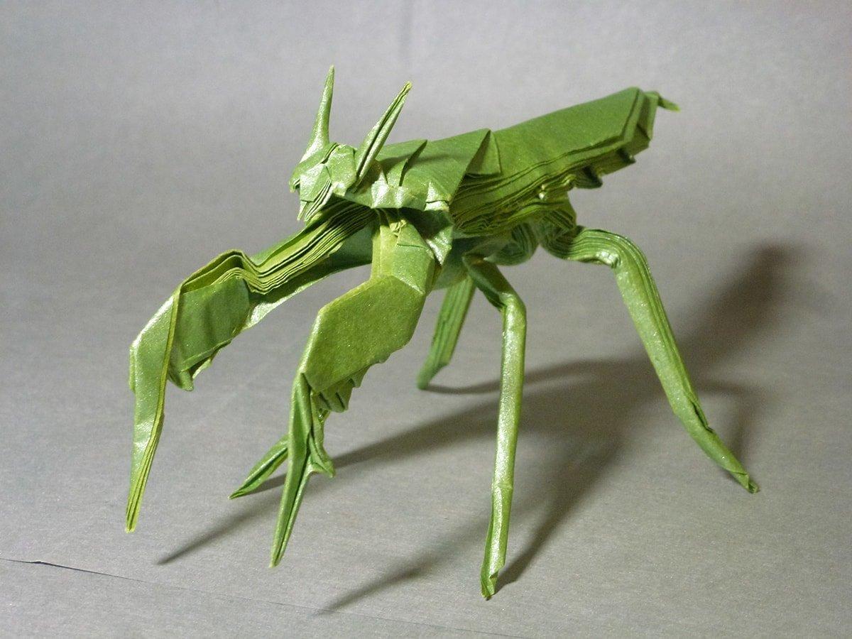 Mantis Boxer