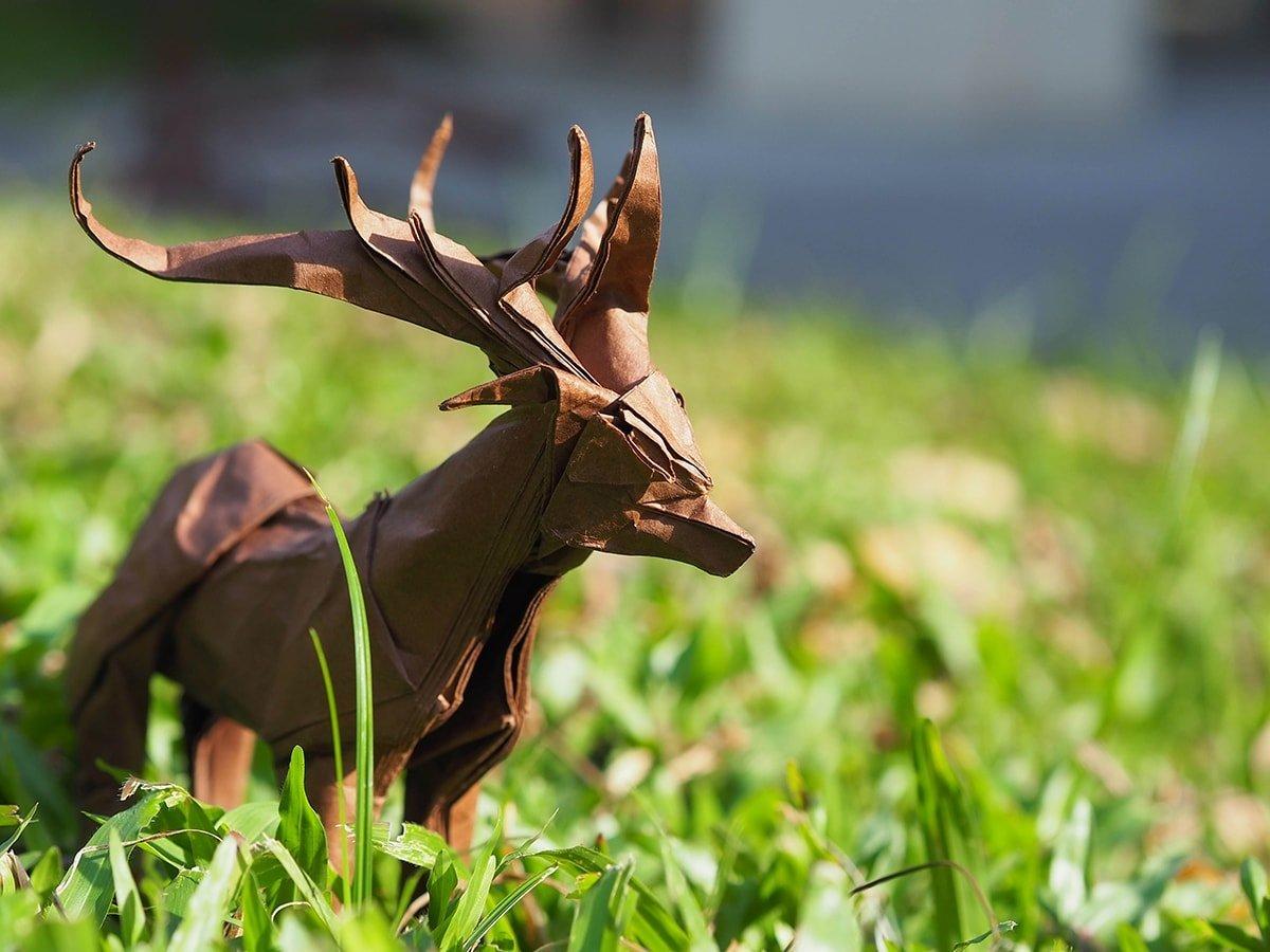Deer by Ivan Danny