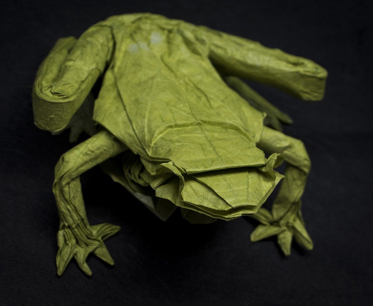 Glass Frog top by Travis Nolan