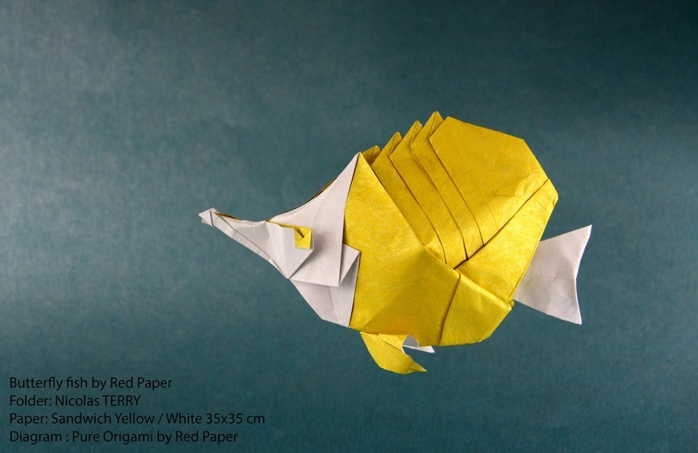 Butterfly fish by Red Paper