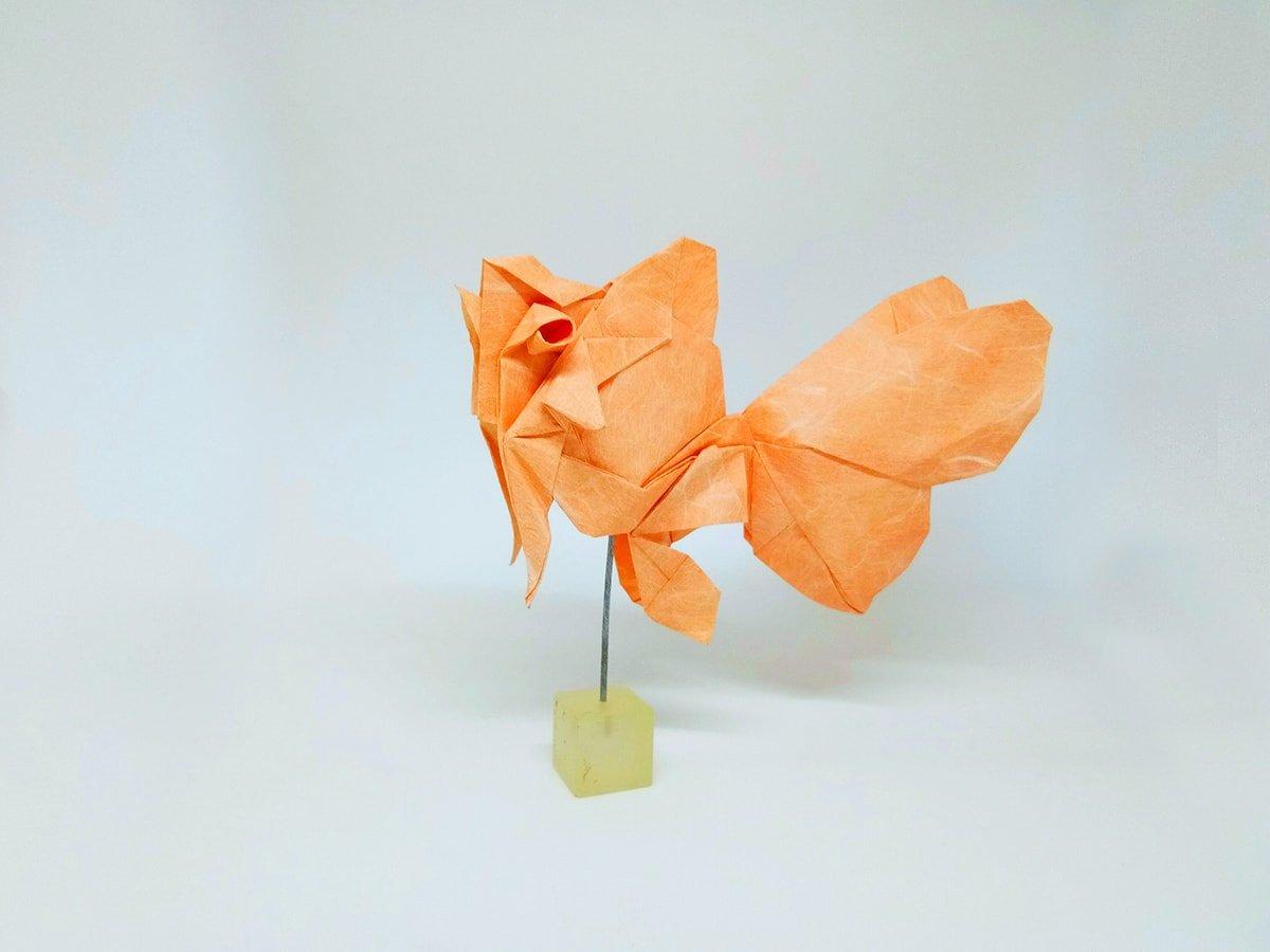 Goldfish by Phạm Hoàng Tuấn