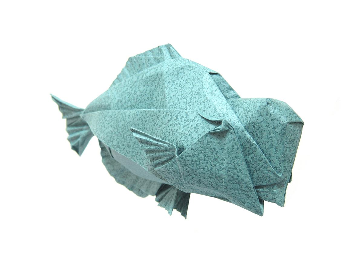 Humphead Parrotfish by Winston