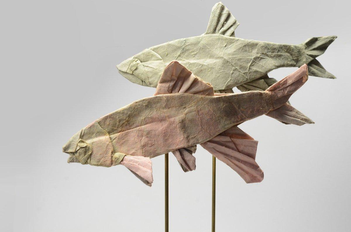 Opsariichthys platypus by Kei Wtanabe